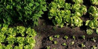 semina primo orto