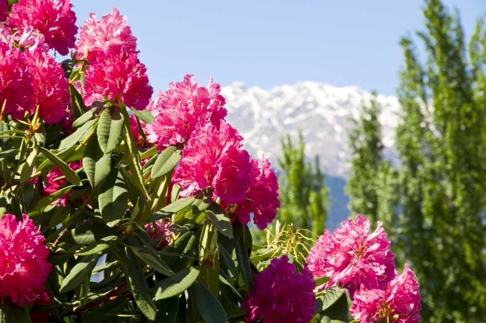 Parchi e giardini le riaperture di aprile cose di casa - Giardini e fiori ...