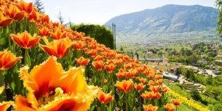 Parchi e giardini: le riaperture di aprile