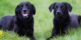 convivenza due cani