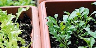 Verdura: anche in vaso sul balcone