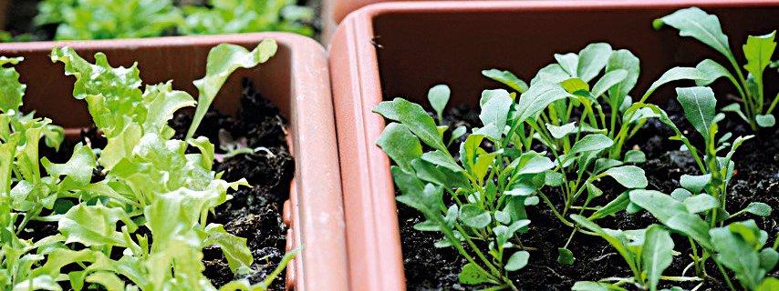 Verdura anche in vaso sul balcone cose di casa - Cucina sul balcone ...