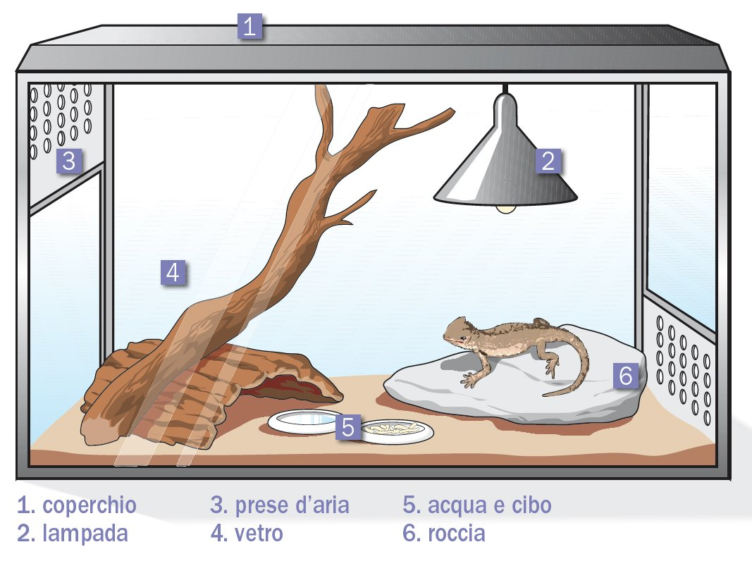 Prodotti Contro I Gechi rettili in casa: caratteristiche, terrario, varietà, regole