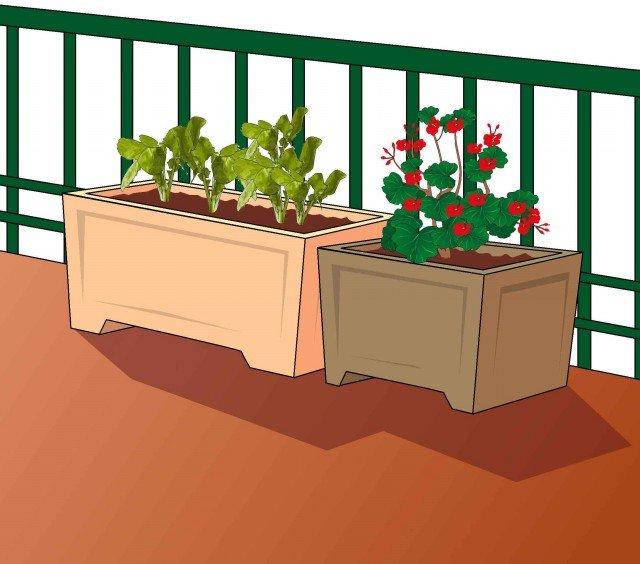 Verdura anche in vaso sul balcone cose di casa for Vasi per semina