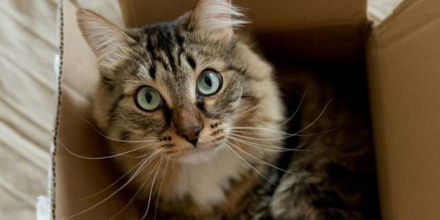 Gatto: cambio casa senza stress