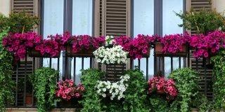 L'impianto di irrigazione automatico per i vasi in balcone