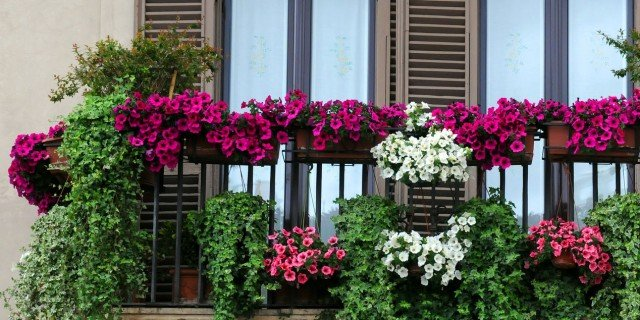 L\'impianto di irrigazione automatico per i vasi in balcone - Cose di ...
