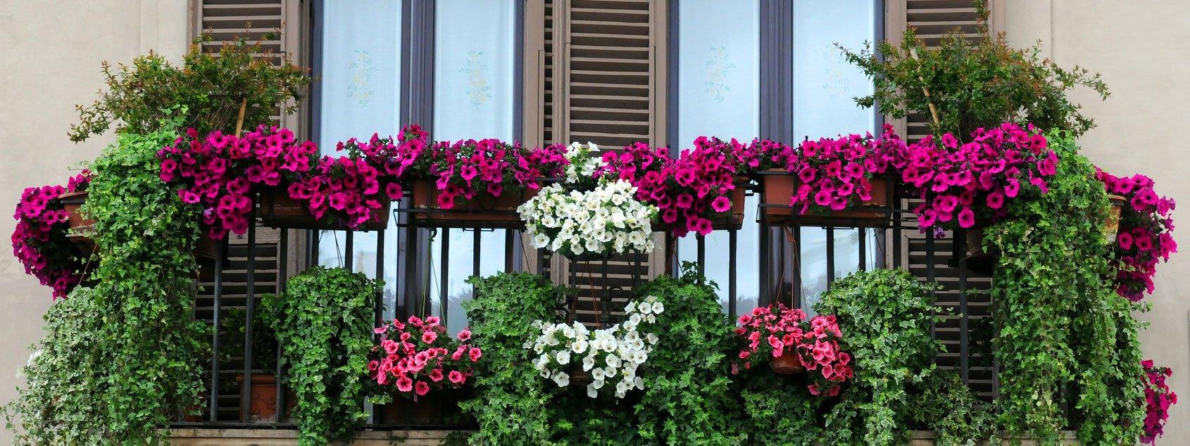 Piante da balcone pendenti panoramio photo of balcone - Piante tappezzanti ...
