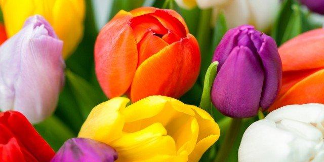 Cure alle bulbose primaverili fiorite