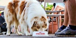 In vacanza con cane e gatto: le precauzioni da non scordare prima della partenza