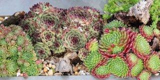 piante grasse cure estive
