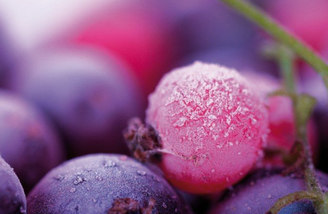 5-Maiuguali--berry-Plastica-tovagietta