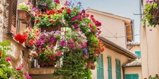 balcone con vasi piante