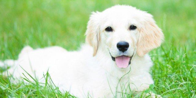 Il cane: regole di buona educazione