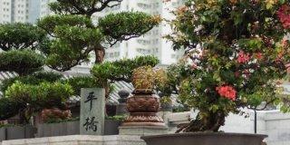 bonsai all'aperto