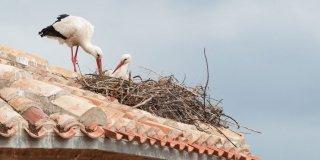 cicogne nel nido