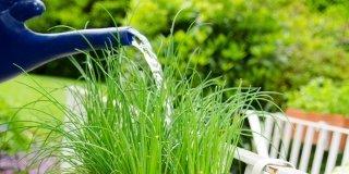 irrigare il giardino o vaso