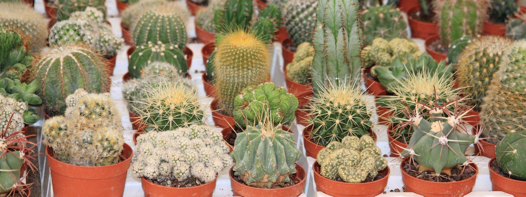 Le piante in miniatura cose di casa for Arredamento in miniatura