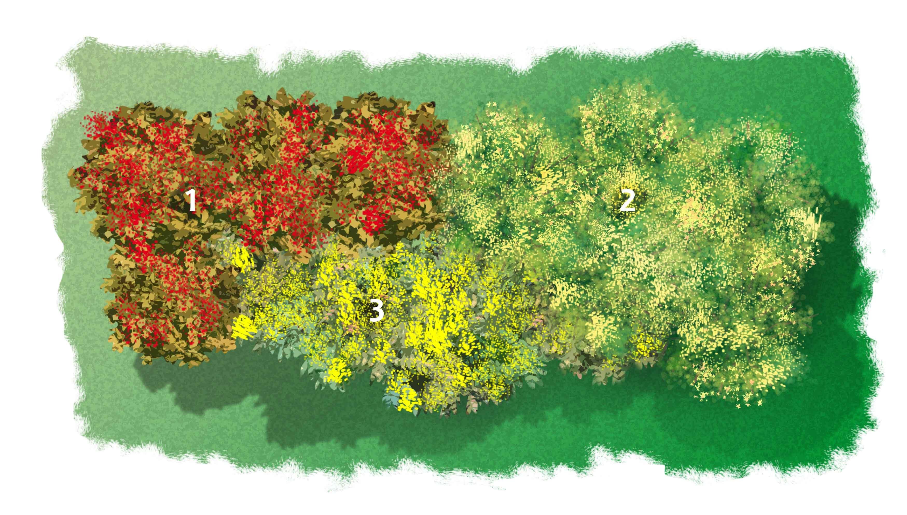 Progettare Un Giardino In Campagna progettare l'aiuola profumata d'inverno - cose di casa