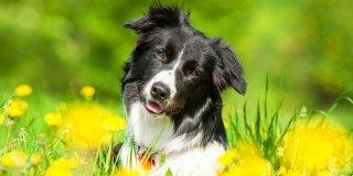 Cane: attenzione a zanzare, pulci e zecche