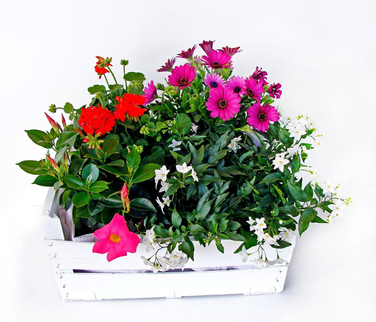 La cassetta fiorita cose di casa for Fiori grassi da giardino