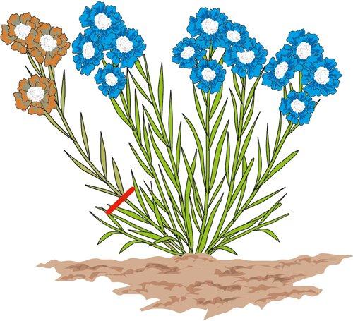 Piante perenni da fiore per giardino ombra for Soluzioni ombra giardino
