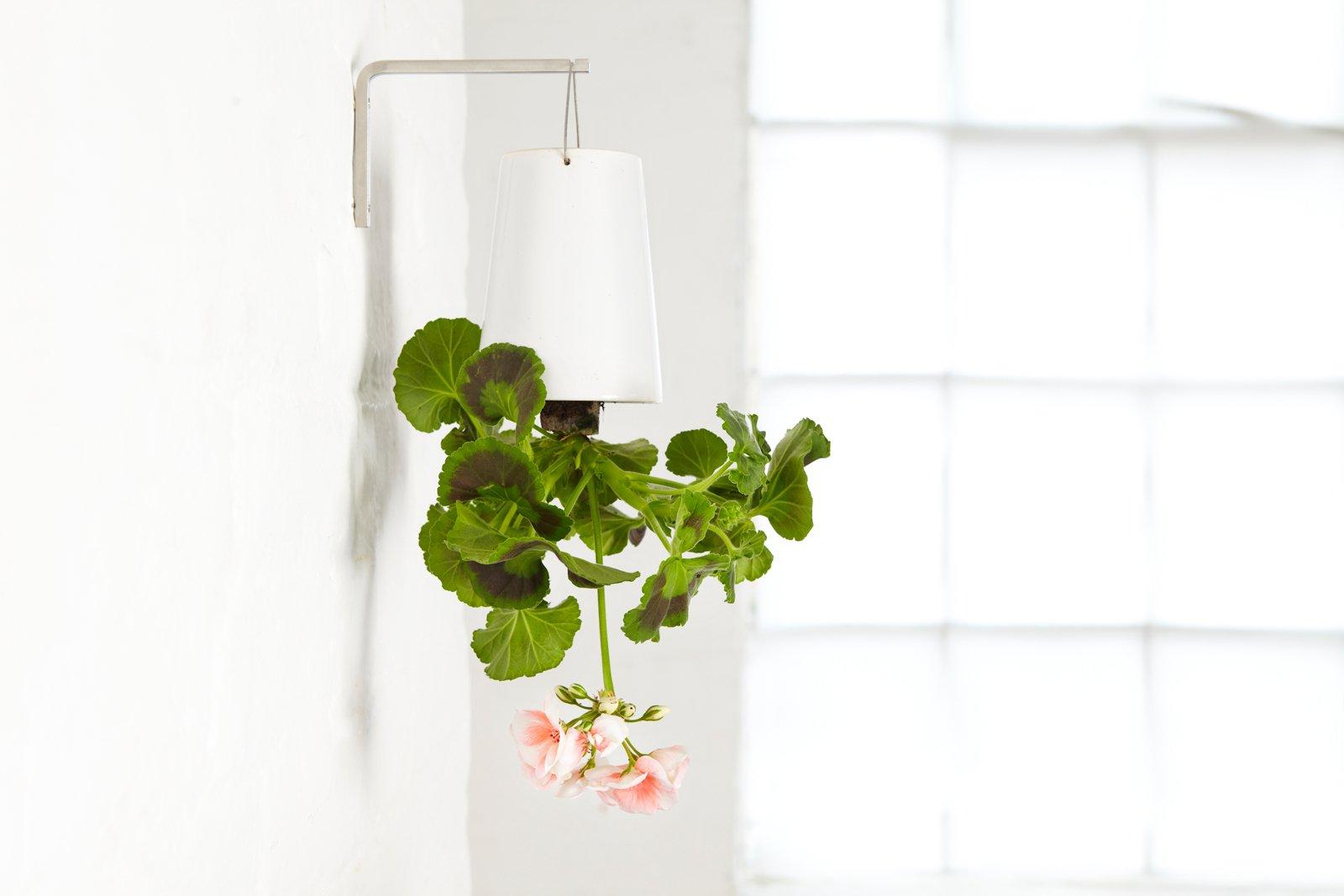 arredare con le piante una parete verde in casa cose di casa. Black Bedroom Furniture Sets. Home Design Ideas