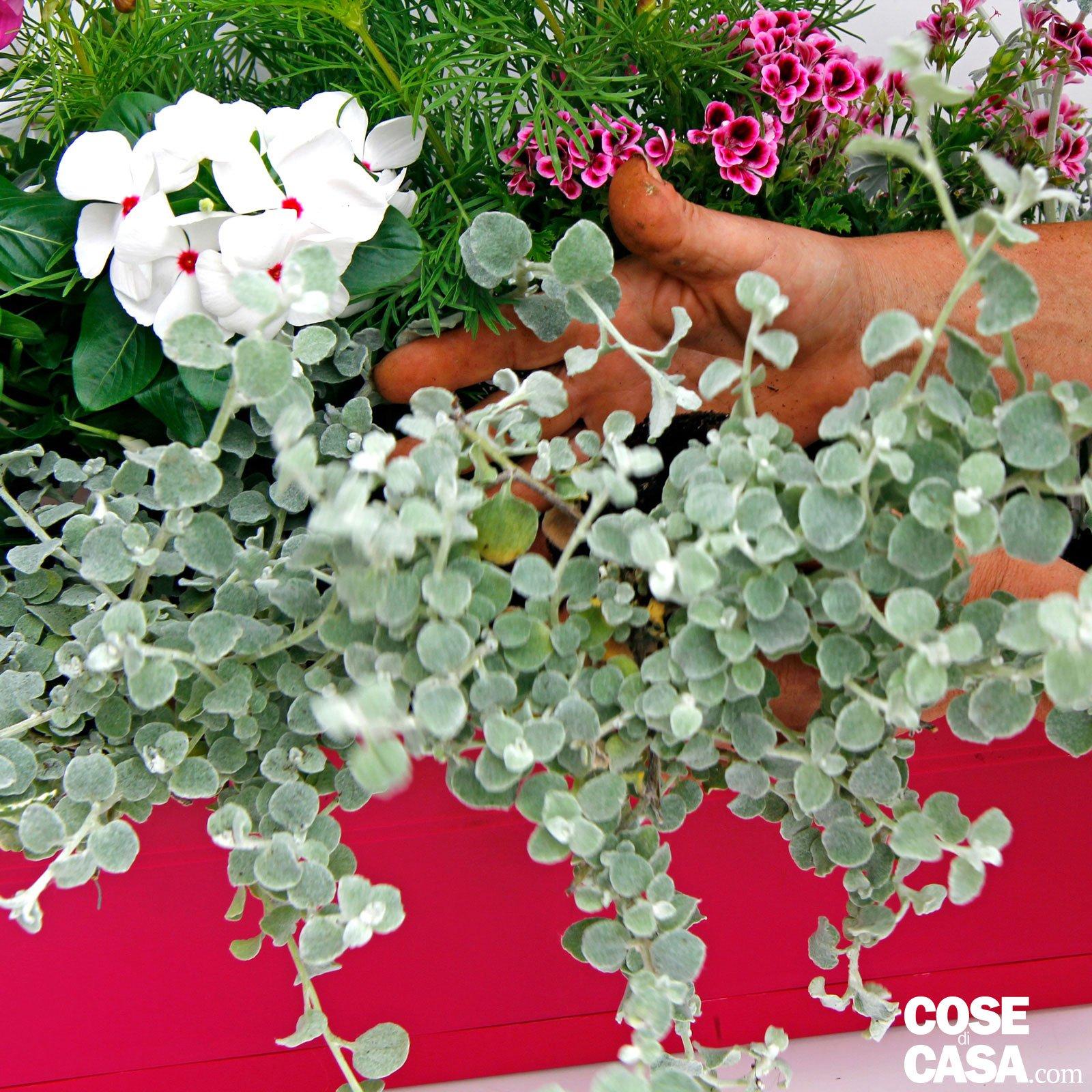 Composizione Vasi Da Balcone il vaso fiorito per il balcone - cose di casa
