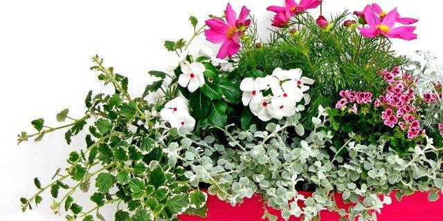 Il vaso fiorito per il balcone