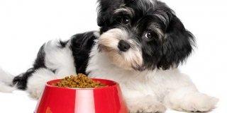 cucciolo cane con ciotola