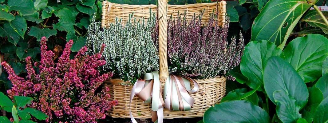 I fiori che sbocciano adesso all aperto cose di casa for Fiori che sbocciano