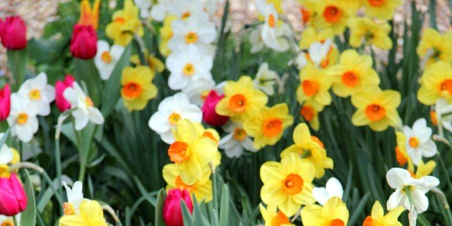 Giardino aiuole e green arredamento cose di casa - Bulbi estivi quando piantarli ...