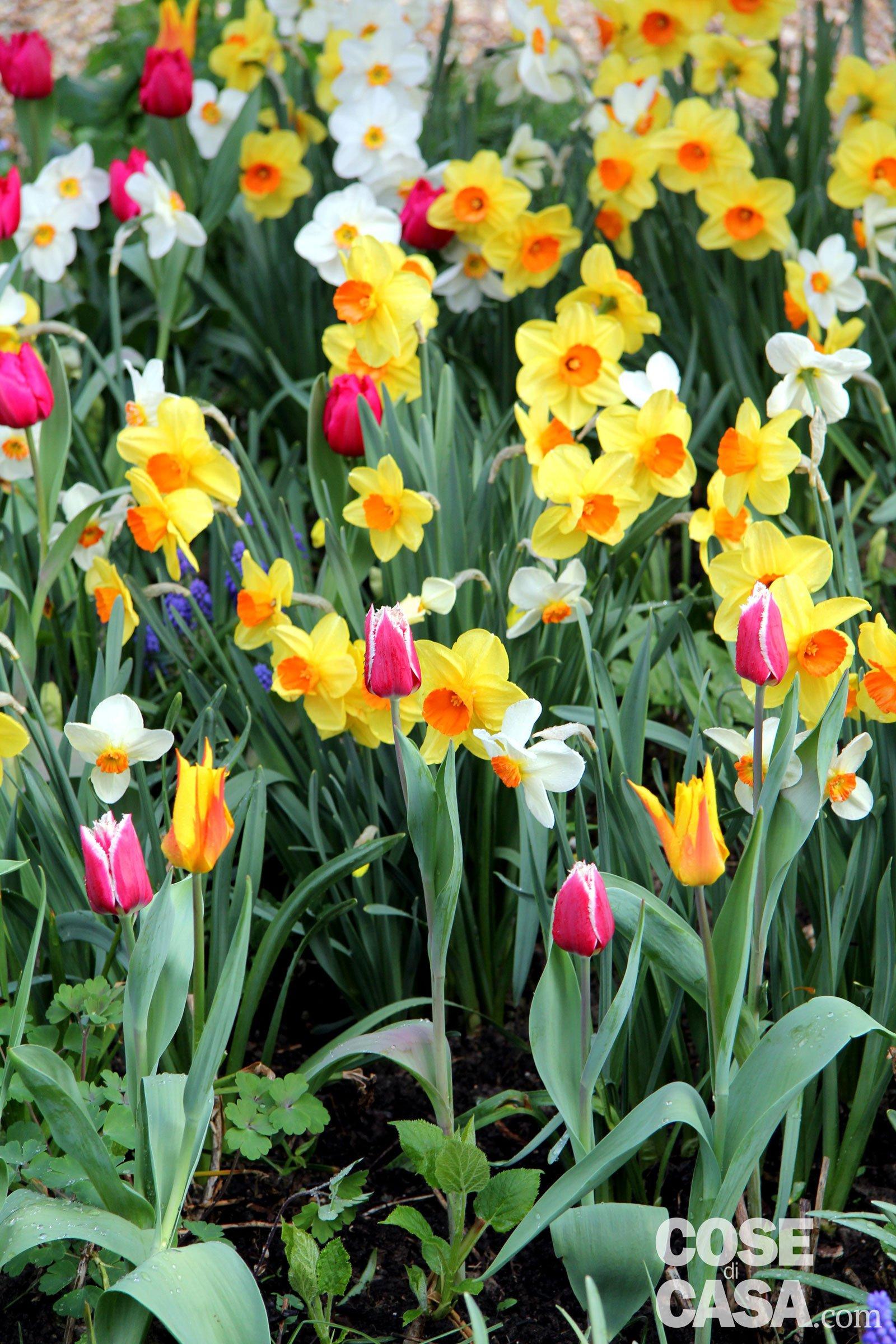 Piantare I Bulbi Di Tulipani bulbi primaverili: quattro modi originali di piantarli