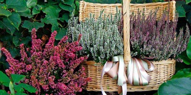 Fiori sul balcone d 39 autunno cose di casa for Fiori che sbocciano
