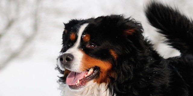 Test: quanto conosci il tuo cane?