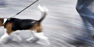 Cane in città: regole di comportamento