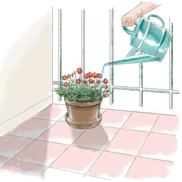 Crisantemi in vaso come farli durare cose di casa - Come si puo durare di piu a letto ...