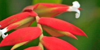 Piante tropicali fiorite in casa a gennaio