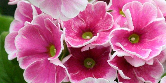 Sulle scale: piante forti che sbocciano adesso