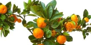 agrumi arance