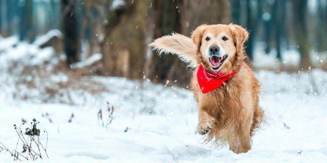 Gatto e cane nella stagione più fredda