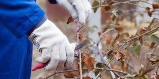 lavori invernali in giardino