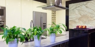 In casa: quale luce per le nostre piante?