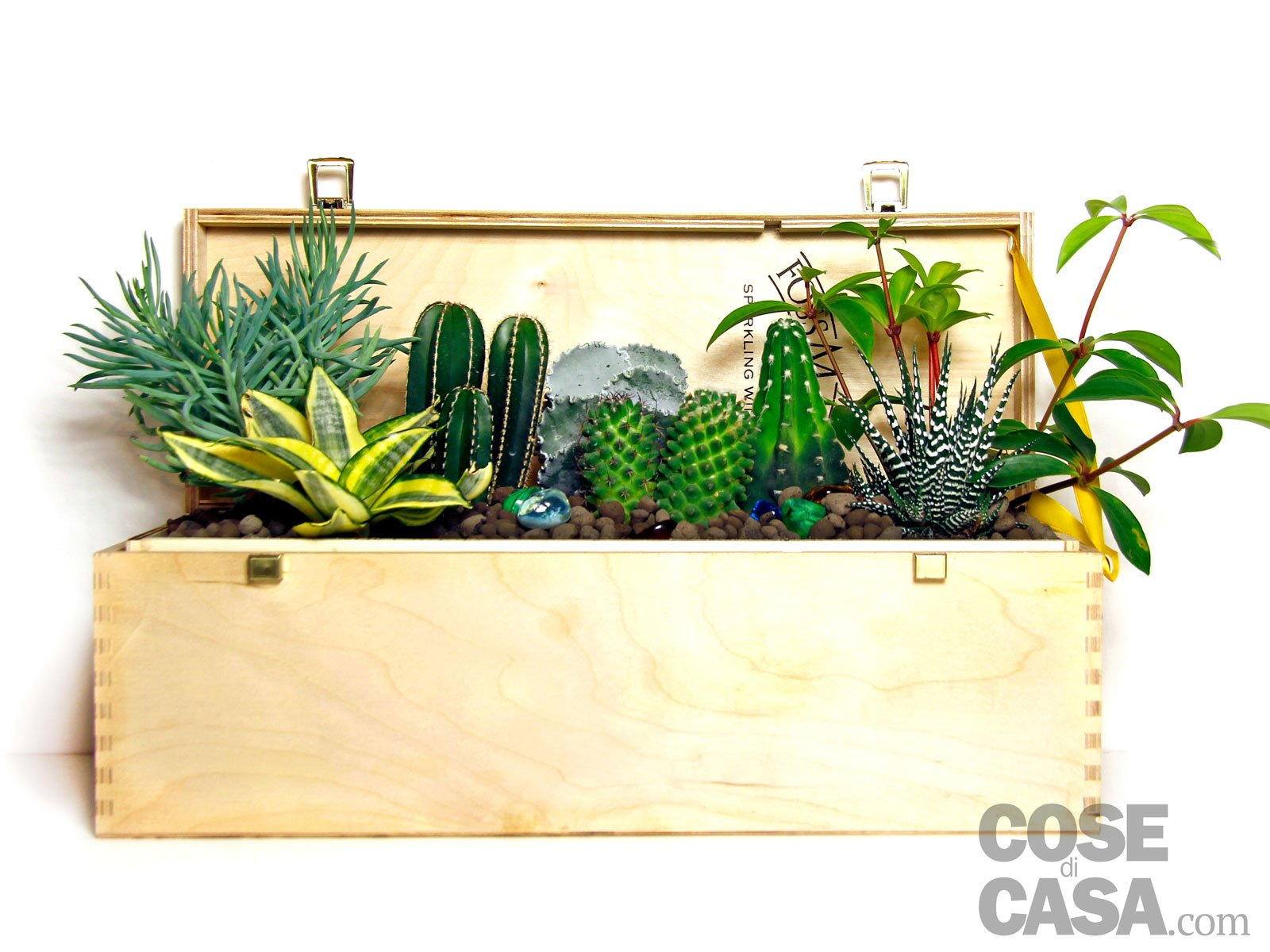 Piante grasse una composizione facile cose di casa - Composizione piante grasse giardino ...