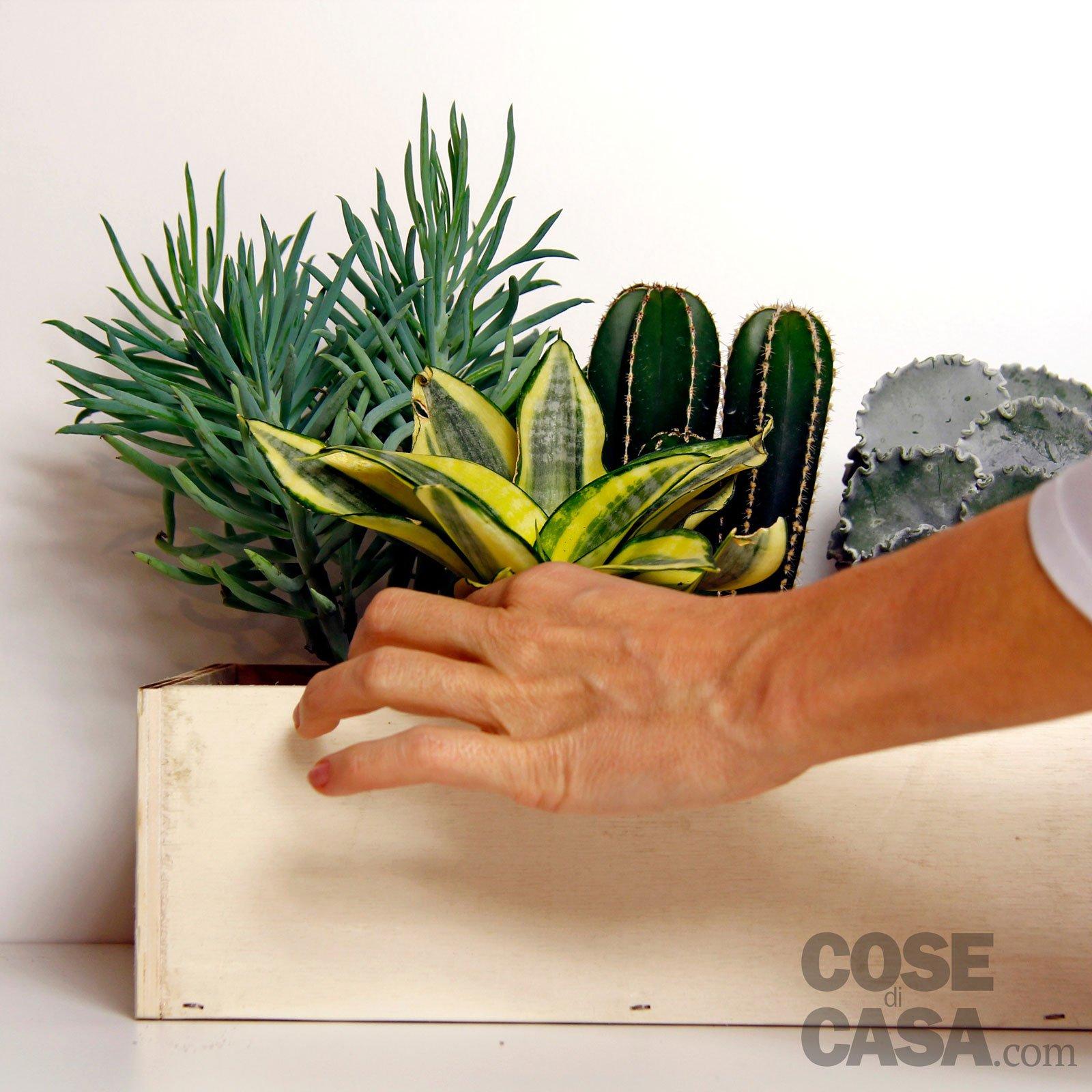 Piante Grasse Piccole Prezzi piante grasse: una composizione facile. come realizzarla
