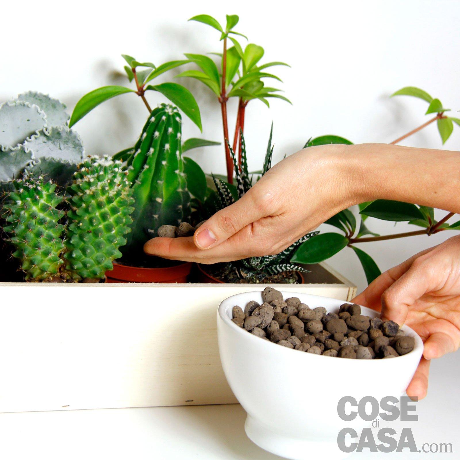 Piante grasse una composizione facile cose di casa - Vasi con piante grasse ...