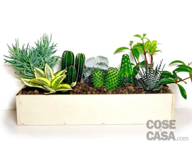 cassetta-piante-grasse-5