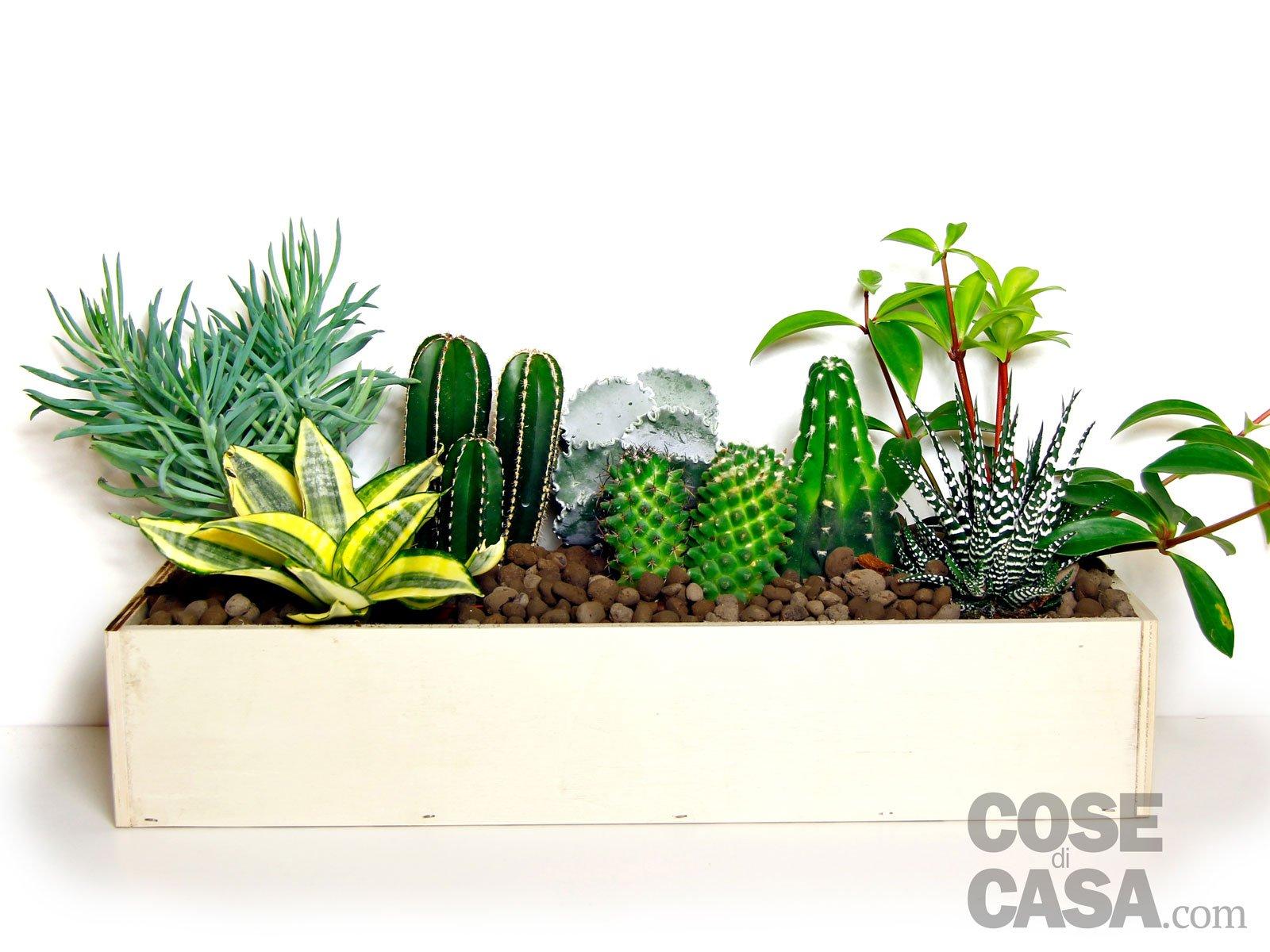 Composizioni piante grasse immagini idee per il design for Foto piante grasse particolari