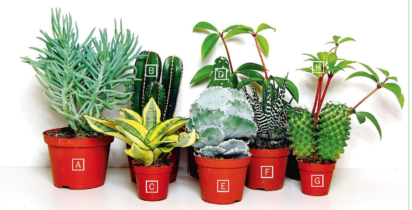 Piante grasse una composizione facile cose di casa for Solo piante