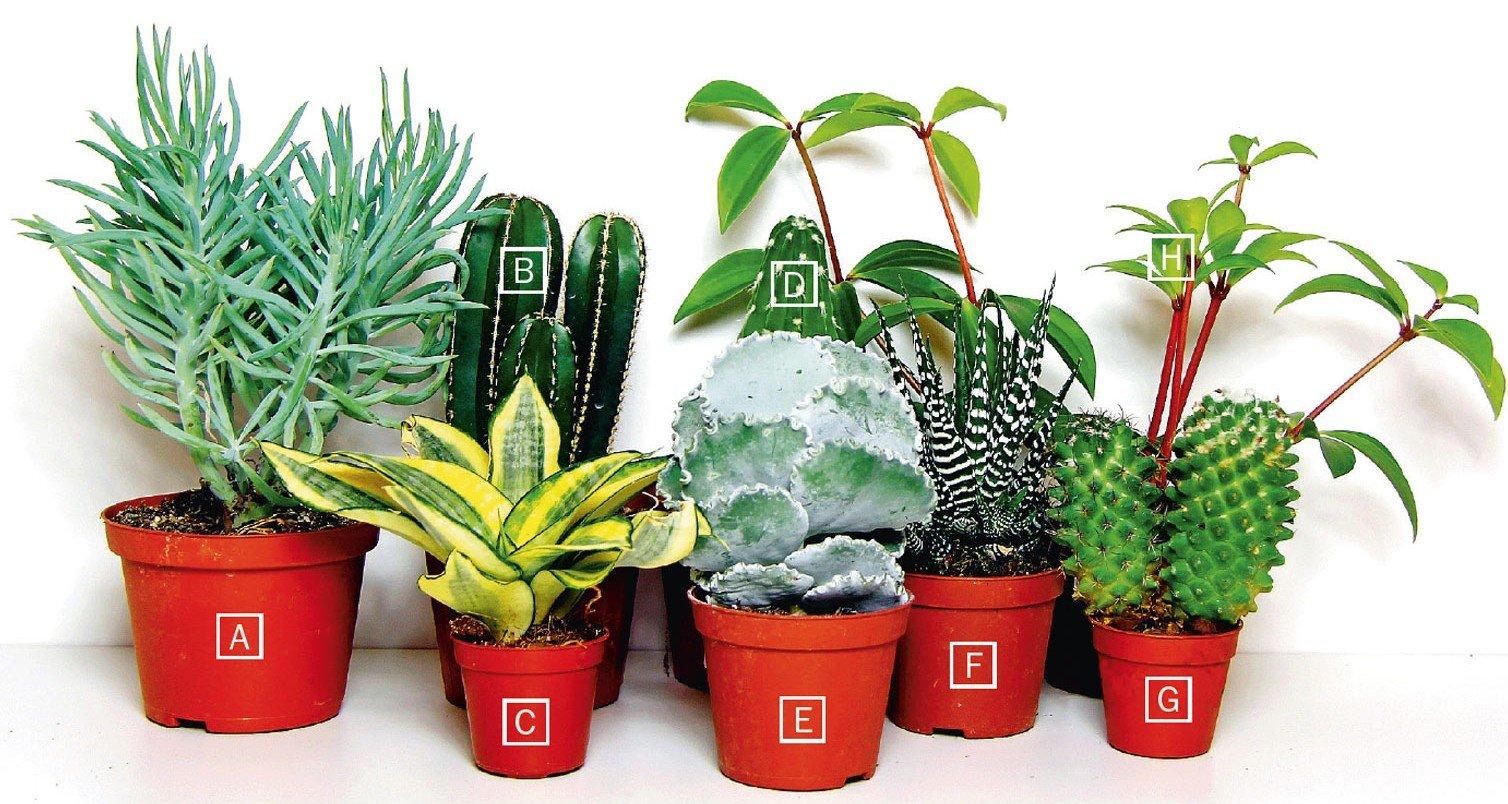 Piante grasse cure speciali se rimangono in casa cose - Composizione piante grasse da interno ...